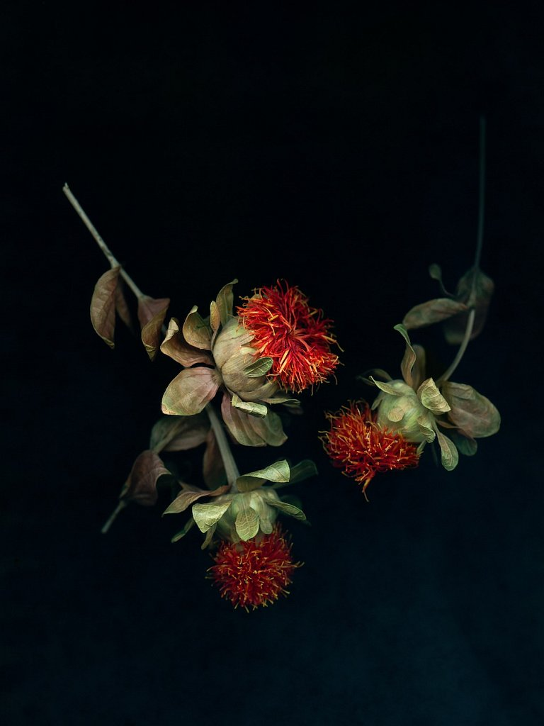 agnes-tanuki-a-personal-herbarium-2.jpg