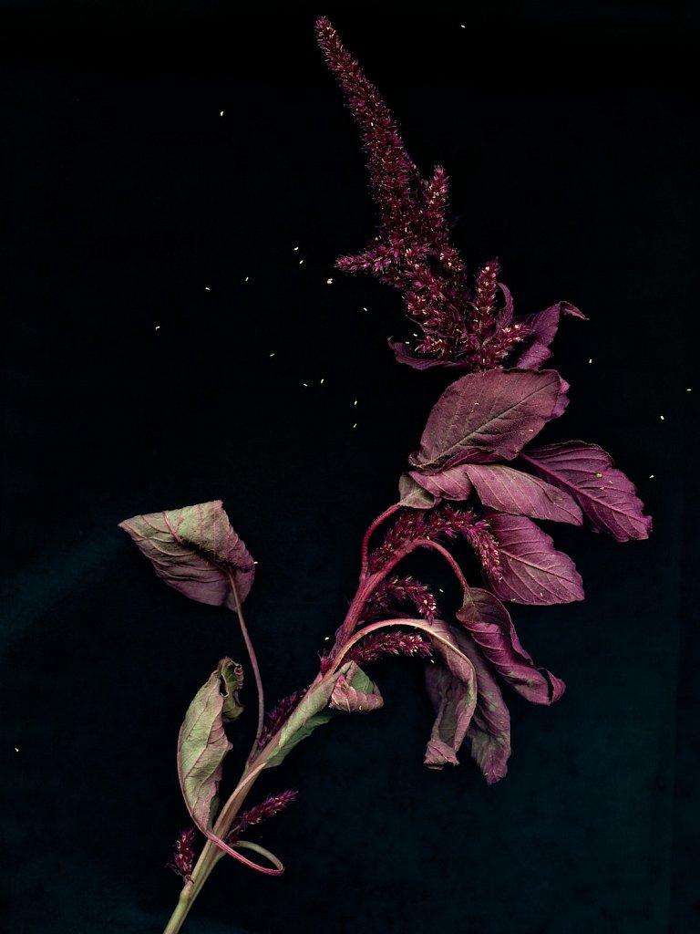 agnes-tanuki-a-personal-herbarium-4.jpg