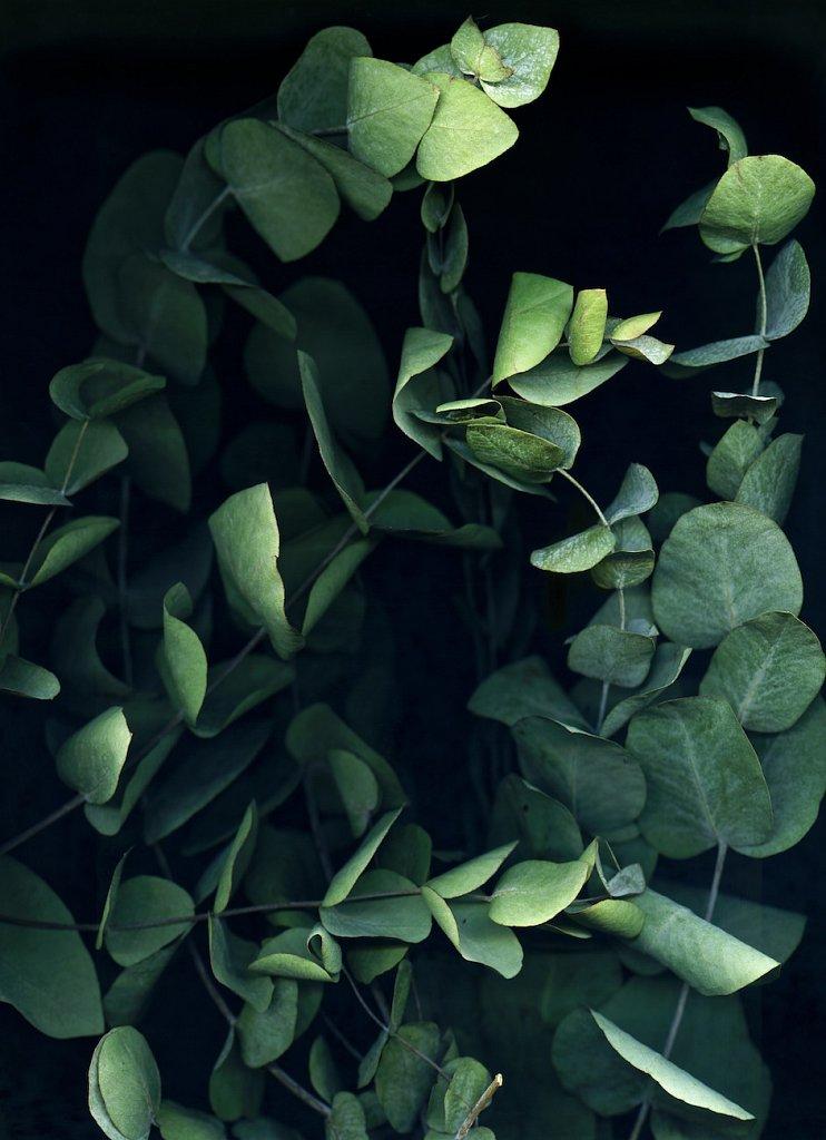 agnes-tanuki-a-personal-herbarium-5.jpg
