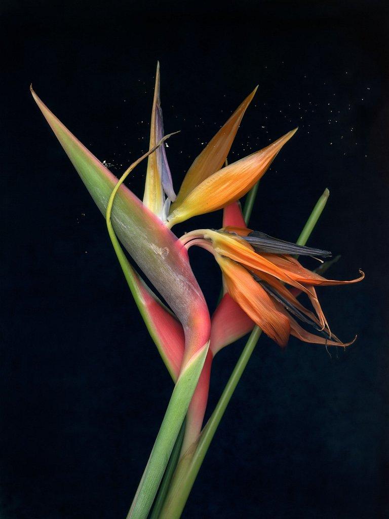 agnes-tanuki-a-personal-herbarium-8.jpg