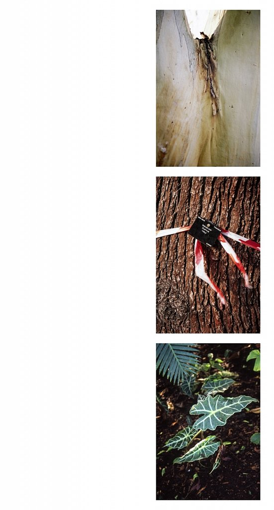 agnes-tanuki-associations-group-2.jpg